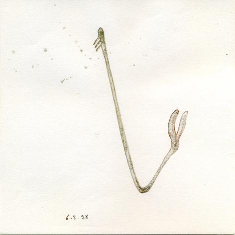 1998-3-6 pied de biche